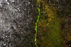 Green moss background texture beautiful in nature stock photography