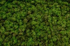 Green moss background texture beautiful in nature. Horizontal Stock Photo