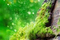 Green moss on bark against bokeh background Stock Image