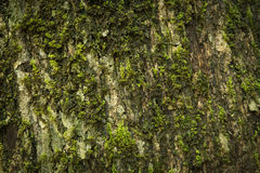 Green moss on bark Royalty Free Stock Photos