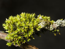 Green moss on bark macro with bokeh background, selective focus Stock Images