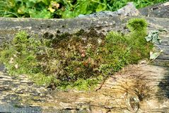 Green moss on the bark of a tree. Stock Photography