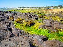 A Green moss at the beach rock. royalty free stock photo