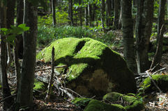 Green moss on the big rock. Stock Image