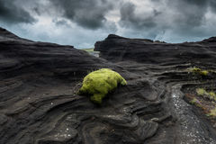 Green Moss on Black Rock Stock Image