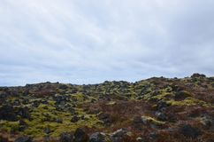 Green moss and black volcanic rock in a lava field stock image