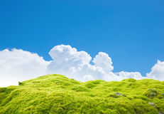 Green moss. On blue sky Royalty Free Stock Photo
