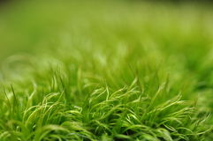 Green moss with blur green background. Green moss detail in bottom with blur green background on top Royalty Free Stock Photos