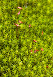 Green moss on a bog Royalty Free Stock Photo