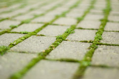Green moss on brick pathway. Green moss grows between bricks on pathway Royalty Free Stock Photo