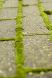 Green moss on brick pathway. Green moss grows between bricks on pathway Stock Photo