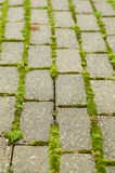 Green moss on brick pathway. Green moss grows between bricks on pathway Stock Image
