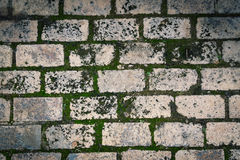 Green moss brick pavement. Bricks pavement with green moss texture background Stock Photos