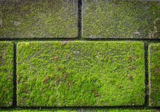 Green moss on brick wall Royalty Free Stock Images