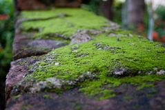 Green moss on the bricks. Green moss on bricks,forming a textured abstract background Royalty Free Stock Images