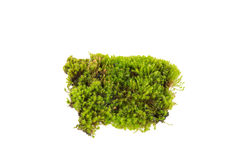 Green moss ,Bright green moss Stock Images