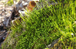 Green Moss Stock Photos