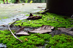 Green moss and brown leaves under a big tree, in the forest, cou Stock Photos