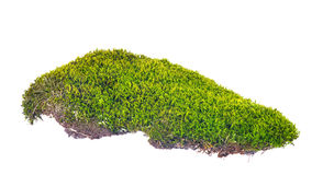 Green moss with brown soil on white Stock Photos
