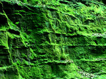 Green Moss Canyon Wisconsin Stock Photography