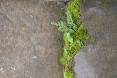 Green moss on cement floor Royalty Free Stock Images