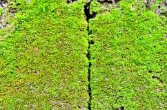 Green moss Royalty Free Stock Photos
