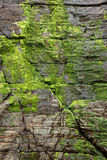 Green moss at cliff Stock Photography