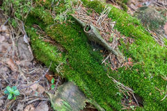 Green moss. Close-up. Royalty Free Stock Images