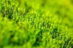 Green moss close - up, beautiful background.  Stock Photos