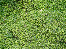 Green moss close-up. In the forest Stock Images