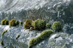Green Moss on Concrete Stock Photo