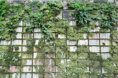 Green moss on concrete wall. Green moss on damp concrete wall Stock Image