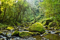 Green moss covered boulders in a leavy river glade. Moss covered boulders in a sleepy stream Stock Photos