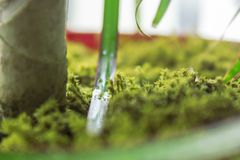 The green moss covered flower pot stock photo