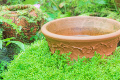 Green moss covered jar Royalty Free Stock Photo