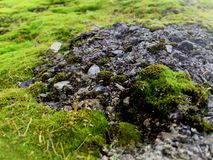 Green moss covered the old asphalt road royalty free stock image
