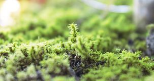 The green moss covered flower pot royalty free stock photos