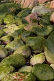 Green moss covered rocks. Abstract background of green moss and algae covered rocks and stones Royalty Free Stock Image