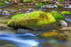 Green moss-covered stone Royalty Free Stock Images