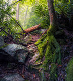 Green Moss Covered the Tree Roots Stock Images