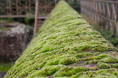 Green moss covering an ancient wall. Royalty Free Stock Photography