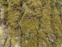 Green moss. Stock Photos
