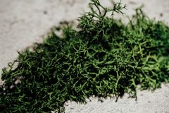 Green moss in the crack of the concrete wall. Loft design, art. Wallpaper, Copy-space for text, texture Stock Photos