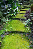 Green moss on damp walking way Royalty Free Stock Photo