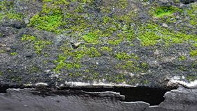 The green moss on the dark wall stock images