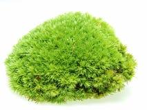 Green Moss Decoration floristry Stock Photos