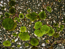 Green moss on defocused bokeh Stock Photos