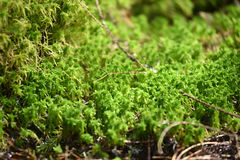 Green moss detail Stock Images
