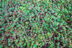 Green moss. Different kinds of green moss Stock Photo