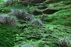 Green moss in the forest Stock Photography